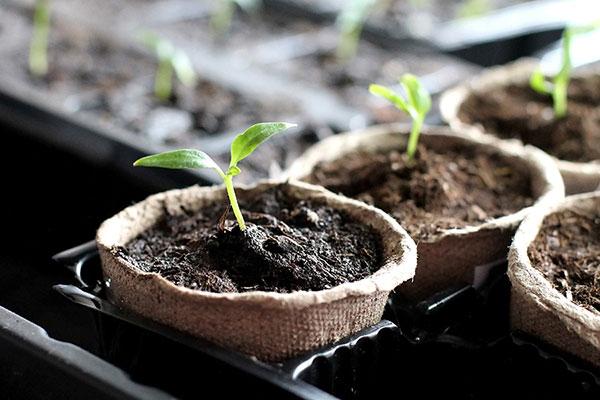 Churchill's Garden Center - Seed Starting