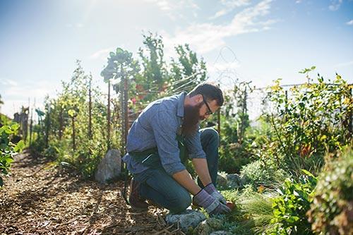 Man Checking Plants