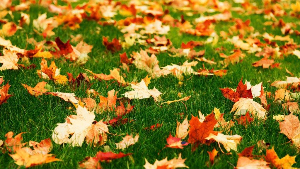 Fall Turf Talk