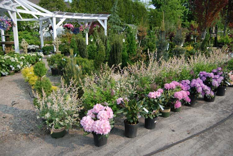 Churchill's Garden Center – Nursery