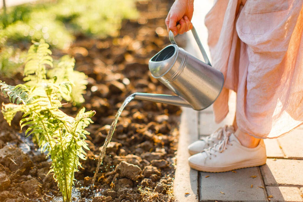 Four Watering Tips to Beat the Summer Heat